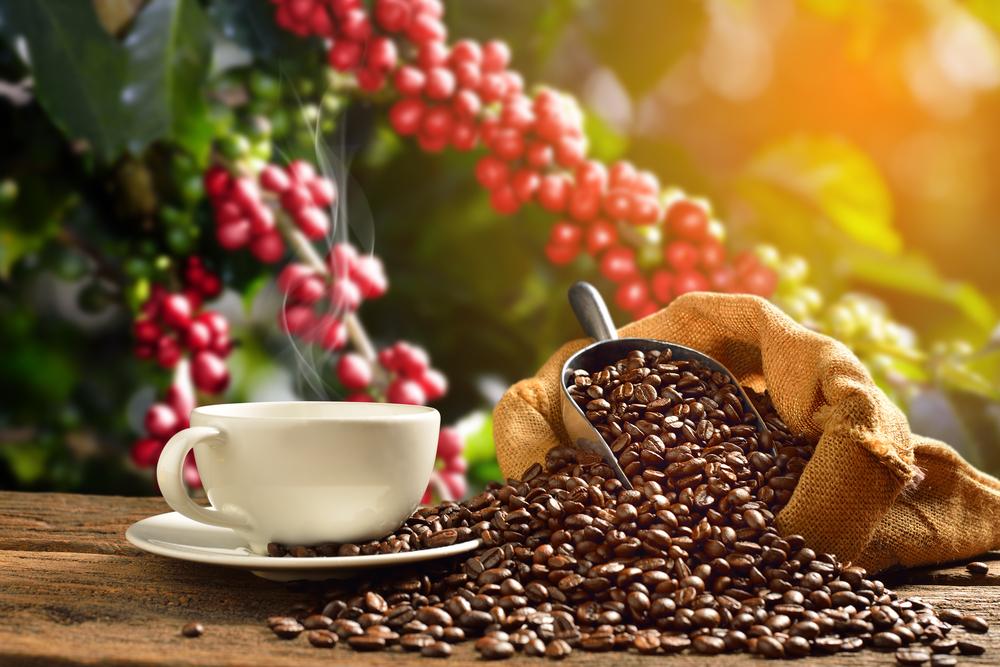 reife Kaffeekirschen und geröstete Kaffeebohnen